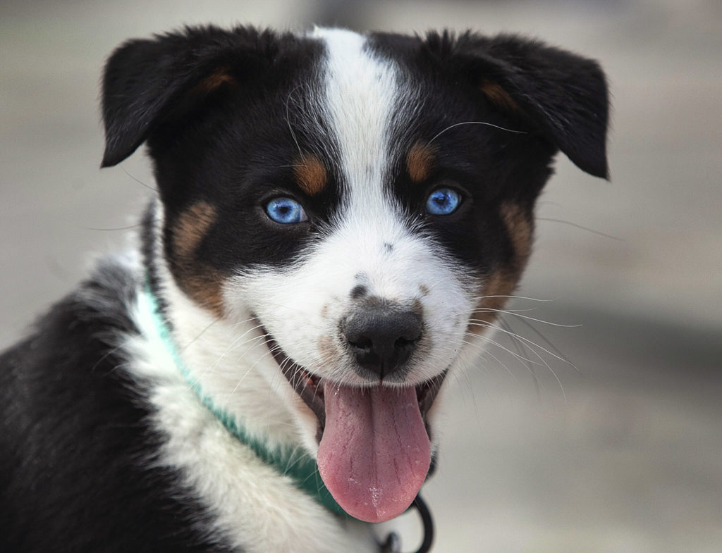 A picture of a new puppy.